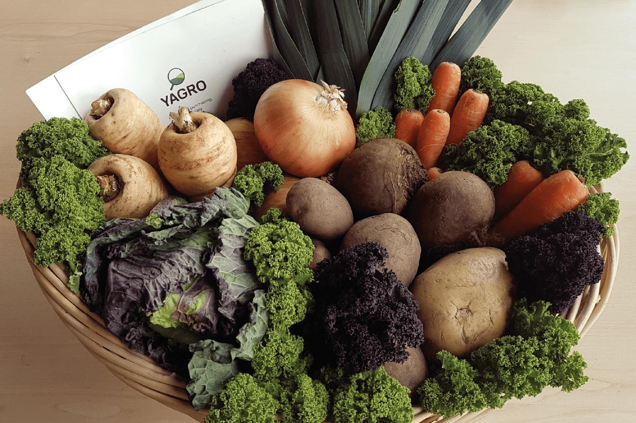 Organic British Vegetable Hamper